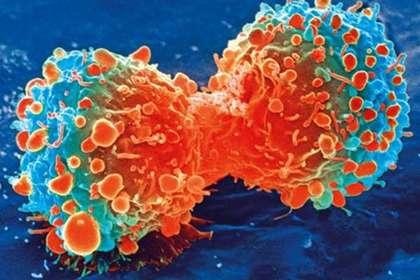 Найдено эффективное лекарство против рака последней стадии