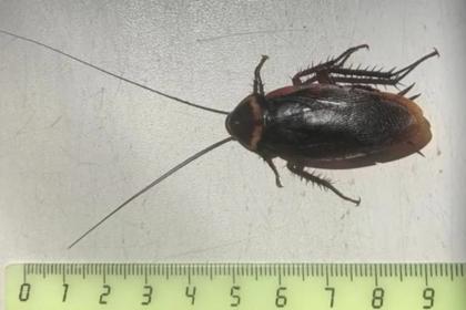В Сочи появились огромные летающие тараканы