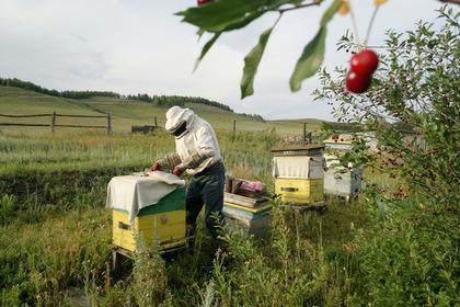 Лужков назвал способ спасения пчел от массовой гибели