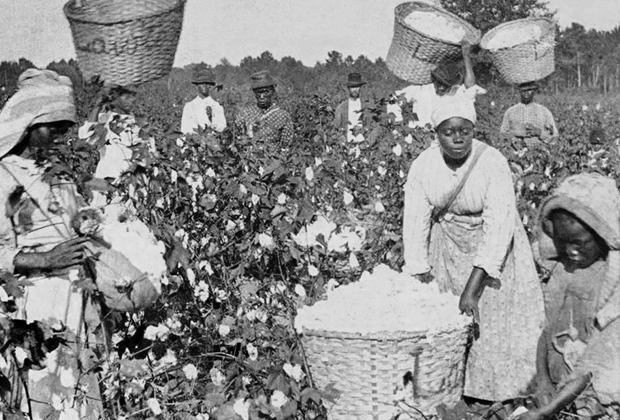 Чернокожие работники за сбором хлопка