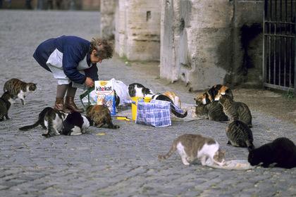 Кормление уличных котов обернулось для старушки тюрьмой