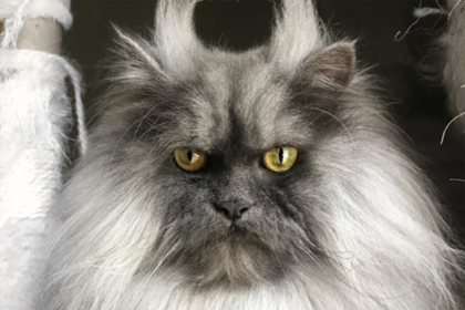 Хмурый кот с озлобленной мордой стал новой звездой соцсетей