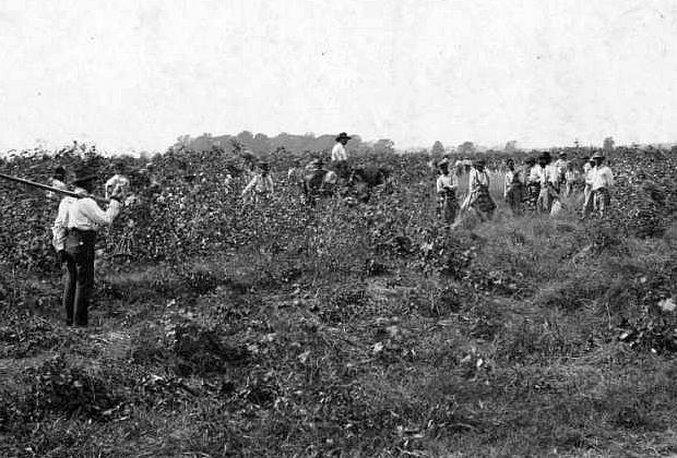 Заключенные за сбором хлопка в Луизиане, середина XX века