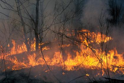 Дым от пожаров в Сибири достиг США