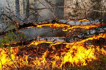 Подсчитаны потери России от лесных пожаров в 2018 году