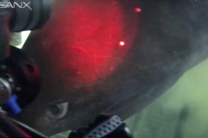 Ученые смогли записать древнейшую акулу на видео