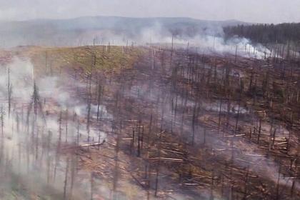 Площадь природных пожаров в России увеличилась