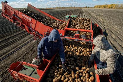 В Приморье приготовились к рекордному урожаю овощей