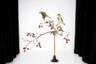 В серии работ «Наблюдательный глаз» финалистки из Финляндии знакомые нам птицы предстают не в привычном виде в природе, а совершенно в другом антураже. Фотограф выделила чижей на белом фоне. Так куда лучше можно разглядеть обычно малозаметных пернатых наблюдателей.