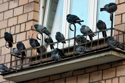 Жилье россиянки превратилось в смертельную ловушку для птиц
