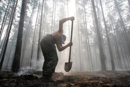 Как тушат пожары в Сибири и что будет с лесом и животными