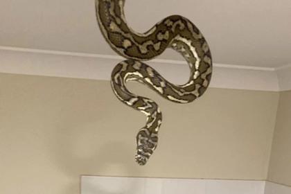 Полутораметровая змея спустилась с потолка в ванной и напугала детей
