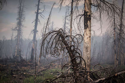 Глава российского региона усомнился в рукотворности лесных пожаров