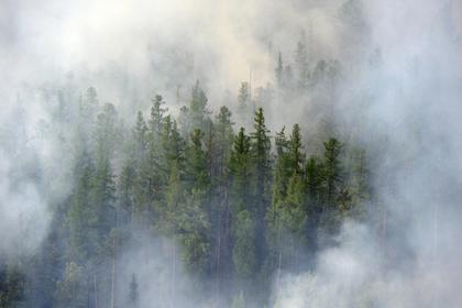 Сибирские лесные пожары впервые сократились