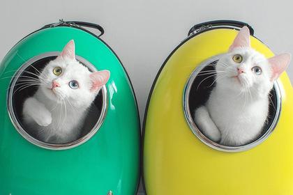 Необычные кошки из России обрели популярность за рубежом