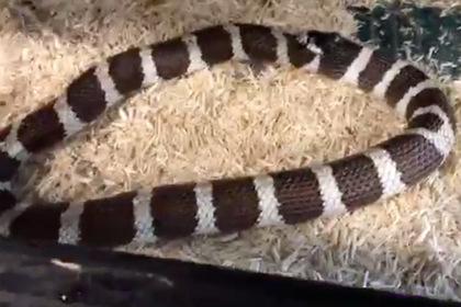 Голодная змея проглотила свой хвост