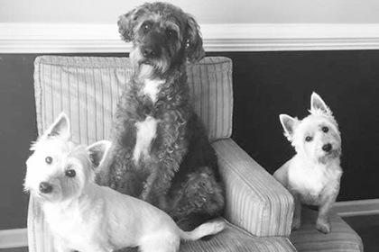 Три собаки умерли в муках после купания в токсичном пруду