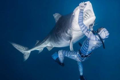 Бесстрашный дайвер ввел в транс смертоносную акулу и попал на видео