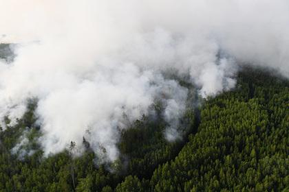 Активисты ОНФ помогут защитить российские города от лесных пожаров