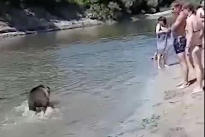 Россиянка решила искупать медведя и привела его на пляж