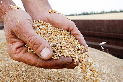 Урожай зерна в России оказался под угрозой
