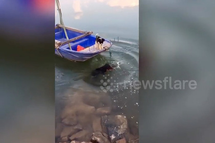 Храбрый пес спас застрявшую в лодке собачку