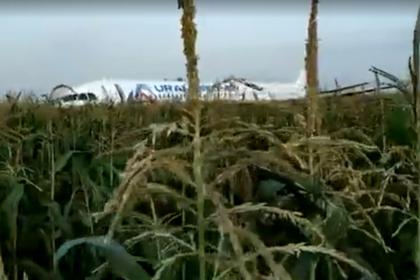 Появилось видео эвакуации пассажиров севшего в кукурузном поле самолета
