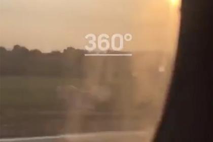 Момент столкновения самолета с птицами в Подмосковье попал на видео