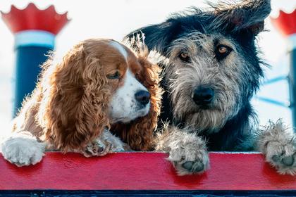 Disney опубликовал фотографию собак из ремейка «Леди и Бродяги»
