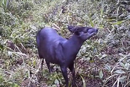 Скрытая камера на Килиманджаро сняла редчайшее животное