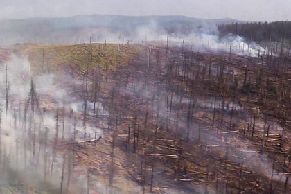 Жалобы россиян из-за пожаров в Сибири признали среднестатистическими