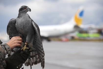 Орнитологи подсчитали количество ЧП с самолетами и предложили решение проблемы