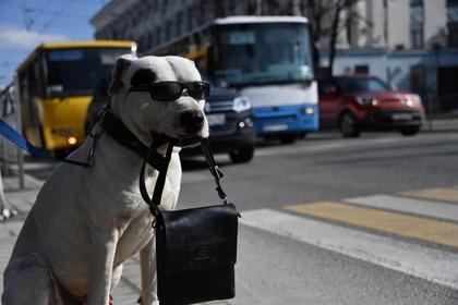 Россиян предложили штрафовать за выгул опасных собак без намордника