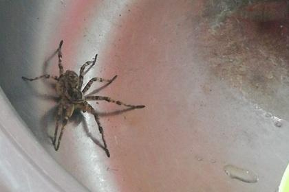 Жители российского города пожаловались на нашествие тарантулов