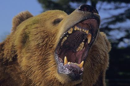 Медведь напал на россиянку и получил от ее приятеля ножом в глаз