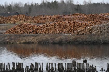 Россия пожертвует своим лесом ради дружбы с Китаем