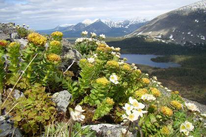 Экологи призвали спасти российский национальный парк от вырубки ради золота