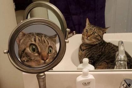 Изумленная собственным видом кошка рассмешила пользователей сети