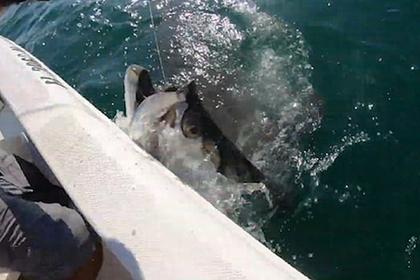 Акула вырвала улов у мужчины из рук и попала на видео