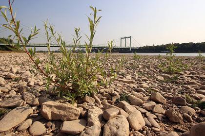 Предсказана массовая гибель людей от климатической катастрофы