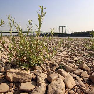 Рейн, обмелевший после жары