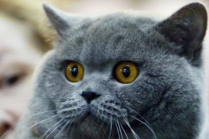 Россиянин продаст исцеляющую от похмелья кошку за 15 миллионов рублей