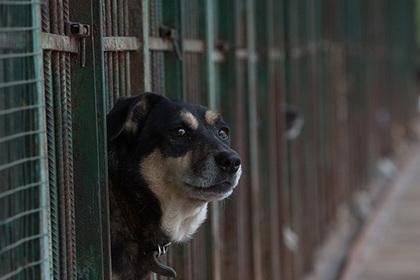 Неизвестные выпустили из клеток и отравили животных в российском приюте