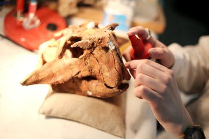 В российском музее оцифруют скелеты пситтакозавров и древних крокодилов
