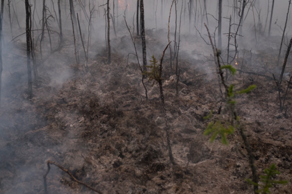 Эти люди спасают российский лес: репортаж из горящей тайги