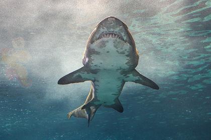Акула напала на плавающую женщину и покусала ее