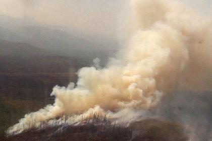 Оценен масштаб экономического ущерба от лесных пожаров в России