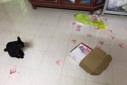 Кот помог женщине найти заначку мужа