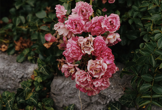 Порт роз
