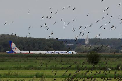 Власти озаботились птицами после аварийной посадки A321 в поле